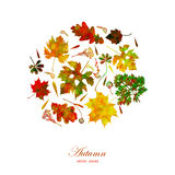 Leaf colorful autumn background. Vector, EPS10. Stock Images