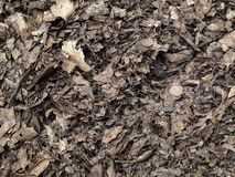 Leaf compost mulch for background Royalty Free Stock Photography