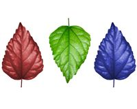 Leaf concept. Looks like RGB system Stock Images