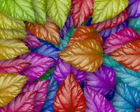 Leaf concept. A lot of colour Stock Photo