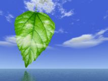 Leaf concept. With 3d rendered background Royalty Free Stock Images