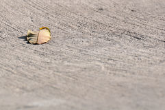 A leaf on concrete cement floor Royalty Free Stock Images