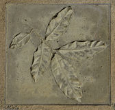 Leaf concrete stamp. Or concrete imprint in a square shape shows texture of leaf with branch Royalty Free Stock Images