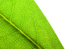 Leaf with copy space Royalty Free Stock Photos