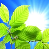 Leaf and copyspace Royalty Free Stock Image