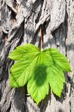Leaf and copyspace Stock Image