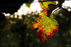 Leaf. In the countryside at the sunset Stock Photography