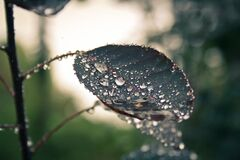 Leaf covered in dew drops Stock Image