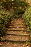 Leaf covered forest path with steps. A winding dirt path in a forest. The path has steps and is strewn with fallen fall leaves stock images