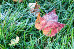 Leaf Covered in Frost on Grass Stock Images