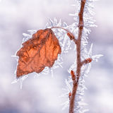 Leaf Covered in Hoarfrost royalty free stock image