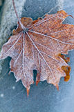 Leaf covered hoarfrost Royalty Free Stock Photography