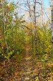 Leaf covered path in Autumn. Path covered with colorful leaves in autumn in a park stock photography