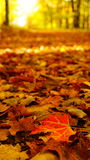 Leaf covered path in autumn Royalty Free Stock Images