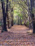 Leaf Covered Path Stock Photos