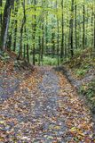 Leaf covered path down a hill through an autumn forest. Green leaves on trees, orange on ground. Fall outdoor scene Stock Photo