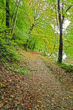 Leaf covered path in early autumn Stock Photo