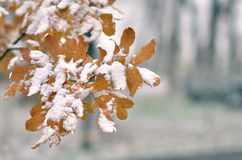Leaf covered with snow Royalty Free Stock Image
