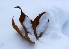 Leaf covered in snow Royalty Free Stock Images