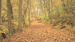 Leaf covered trail in autumn zoom out. Video of leaf covered trail in autumn zoom out stock footage