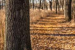 Leaf covered trail at the Little Red Schoolhouse Nature Center. In Willow Springs, Illinois Stock Photo
