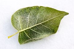 Leaf covered by winter treasures. During strong frosts Royalty Free Stock Image