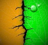 Leaf with crack. Leaf of tree with a crack middle. Eps 10 vector illustration