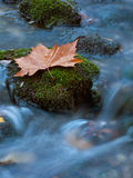 Leaf at the creek 3 Stock Photo