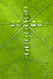 Leaf Cross Nature God stock photography