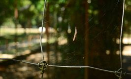 Leaves on spider web royalty free stock image