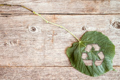 Leaf with a cutout of a recycle symbol Stock Photo