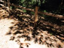 Leaf dapples Stock Photo