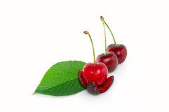 Leaf and dark cherry fruits Stock Photos