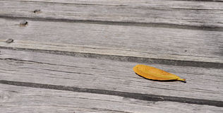 Leaf on a deck. Yellow leaf on a wooden deck Royalty Free Stock Photos
