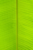 Leaf of decorative palm Stock Photography