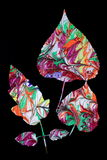Leaf Design Stock Photos