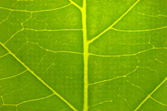 Leaf design Royalty Free Stock Photos
