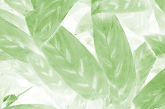 The leaf design background Royalty Free Stock Photography
