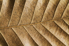 Leaf detail Royalty Free Stock Photography