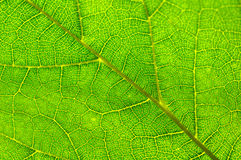 Leaf Detail Stock Photo