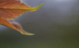 Leaf detail. Plant life, Macro, Close up, leaf detail Stock Photography