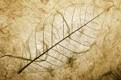 Leaf detail. Luminous detail of leaf veins and structure on textures background stock image