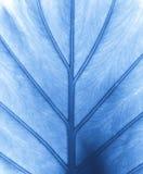 Leaf detail Stock Images