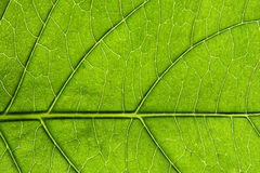 Leaf detail 6. Stock Photos