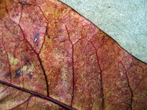 Leaf detail Stock Photos