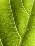 Leaf Detail Stock Images