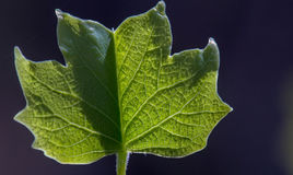 Leaf with Detail Stock Photo