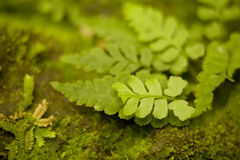 Leaf Detail with Moss Stock Image