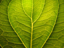 Leaf detail with shadows. A closeup shot of a leaf with detailed shadow Stock Image