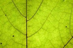 Free Leaf Detail Texture Stock Photos - 15233633
